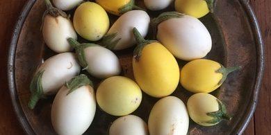 Curry van witte aubergines