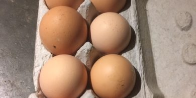 Verse eieren